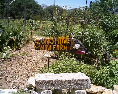25  Grow your own organic food & flowers at Sunshine Community