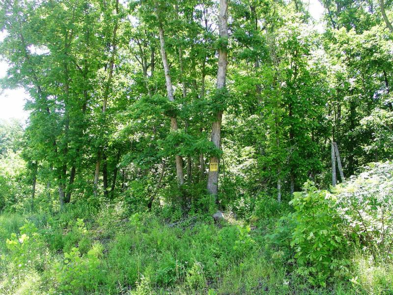 30 acres more or less wooded