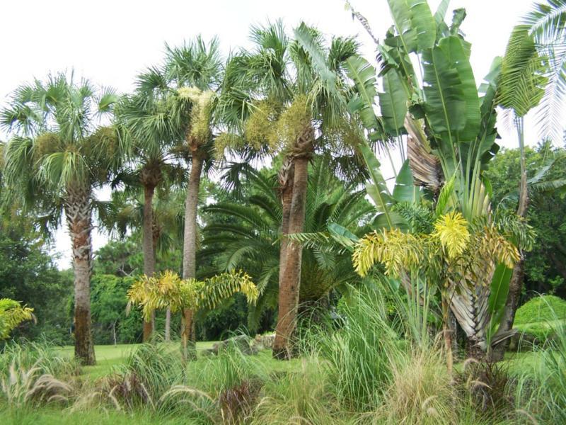 Florida'S Lush Tropical Landscape
