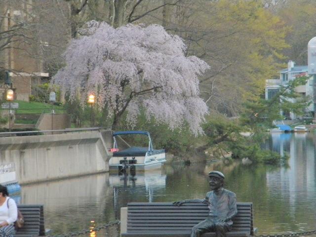 Reston's Lake Anne Center Blooms at Sunset