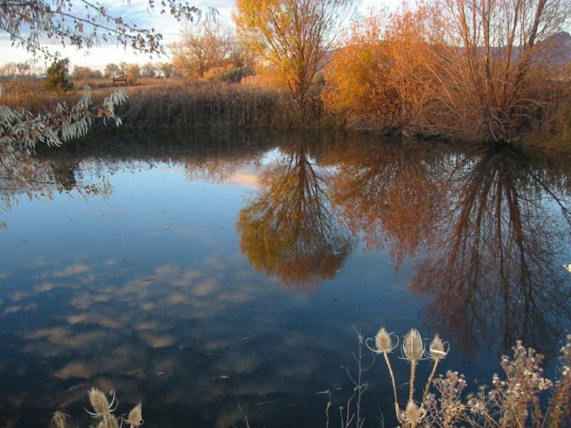 Taos Reflection of Fall in Pond
