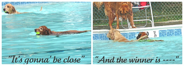 Dogs in Lake Ridge Pool