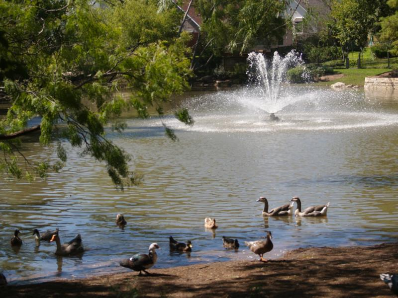 The Lindshire Park And Duck Pond In Southwest Austin