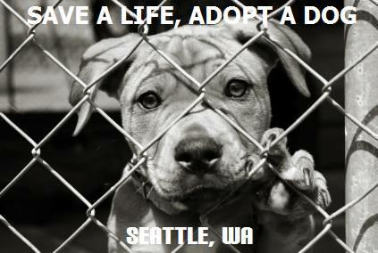 foster dog adoption in seattle wa dog adoption 423x284