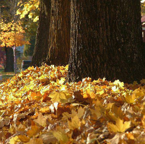 Coeur d'alene Leaf Fest
