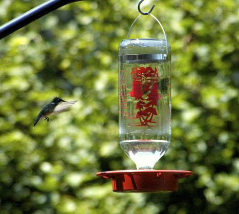Hummingbird landing on feeder