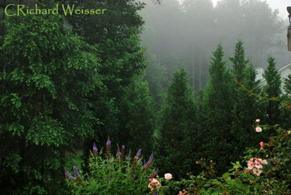 Early Morning view from the deck by Richard Weisser