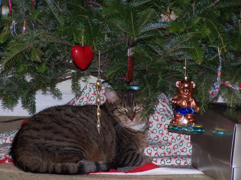 ... to my cat Scat's dismay, it is time to discard the Christmas Tree