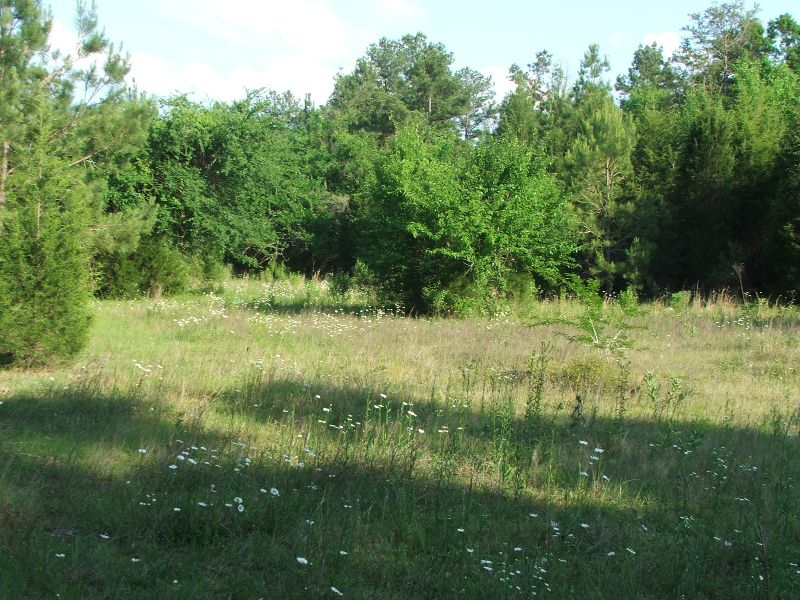 16 acres for sale in Perry County, Alabama