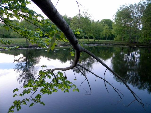 Another Franklin Farm pond shot