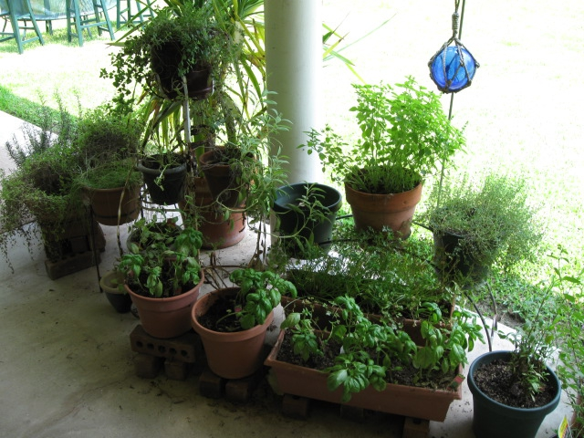 Mari's Herb Garden, Texas: Walker County: Huntsville: Elkins Lake