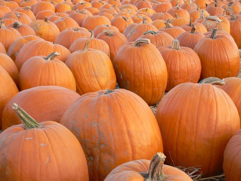 Brad Andersohn - Pumpkin Photo