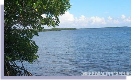 Biscayne Bay View From Palmetto Bay