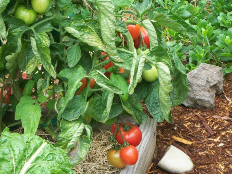 Instant Organic Garden : Organic gardening with instant garden build one