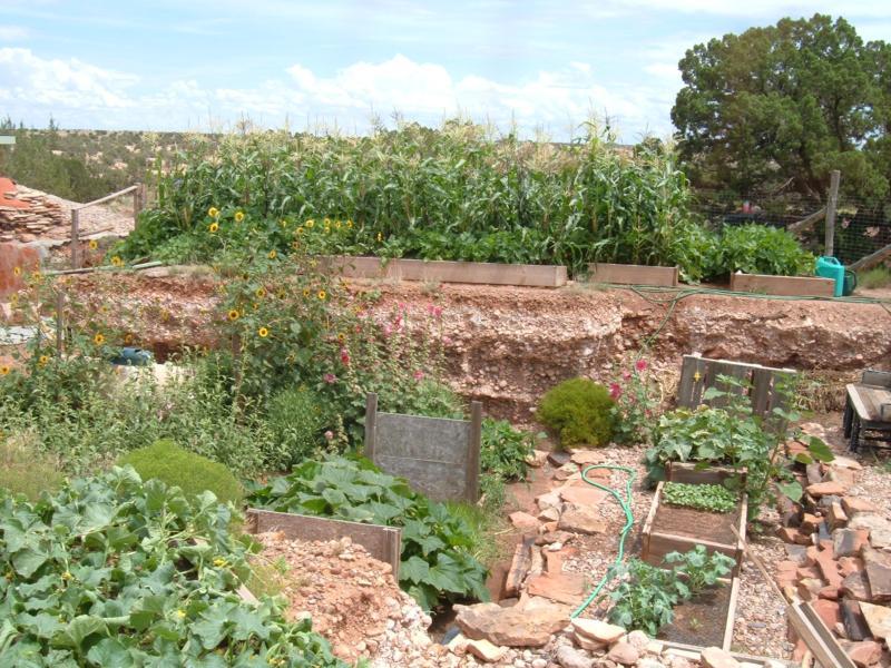 Homesteading Part 2 High Desert Gardening