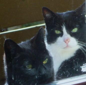Bixler Kitties ..HomeRome 410-530-2400