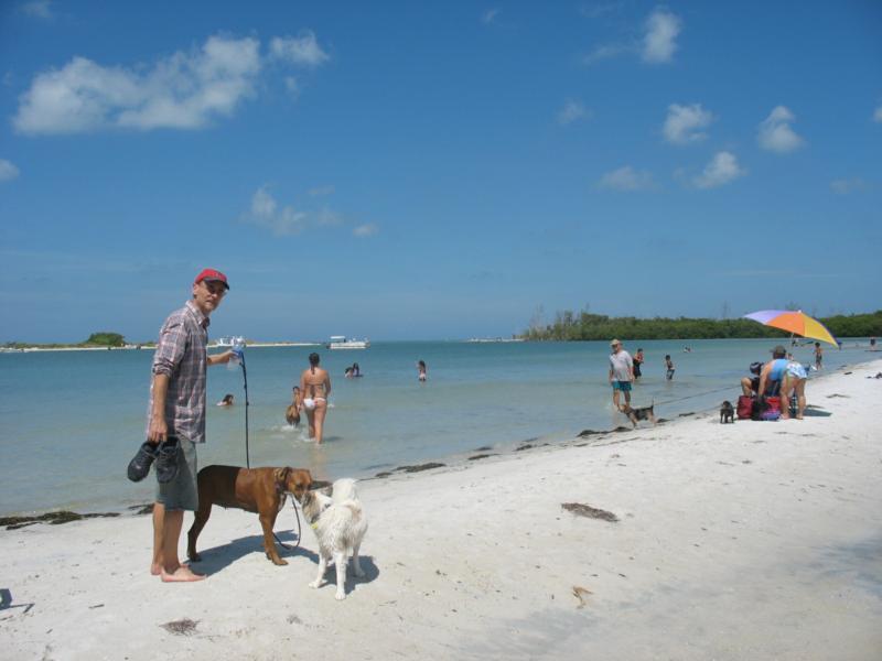 Mimi And Her Posse At The Bonita Springs Beach Dog Park