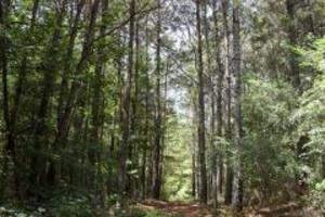 Amite County Mississippi land for sale