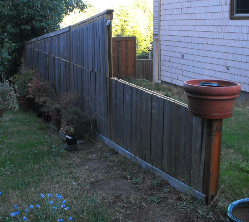 Sure wish the fence was shorter