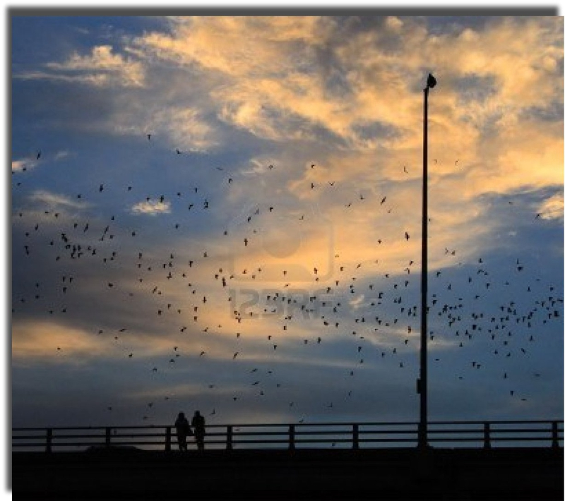 750,000 bats fly out at dusk from the Ann Richards Bridge during spring/summer....at their peak the number reaches 1.5 million!