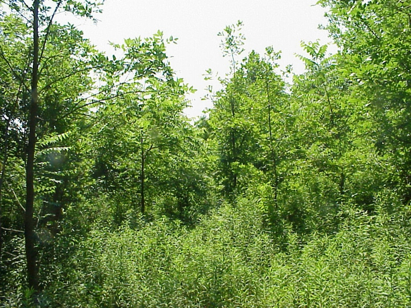 Wooded Acreage for sale in West Lafayette, Tippecanoe County close to Purdue listed for sale by Sharon and Bruce Walter at Keller Williams Realty in Lafayette, Indiana