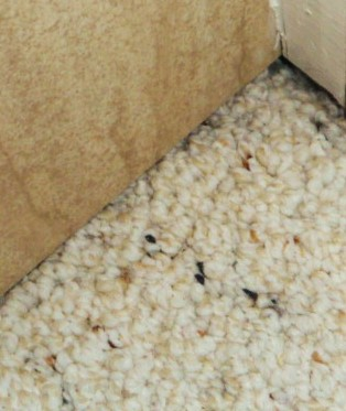 What's Under the Carpet HomeRome Realty