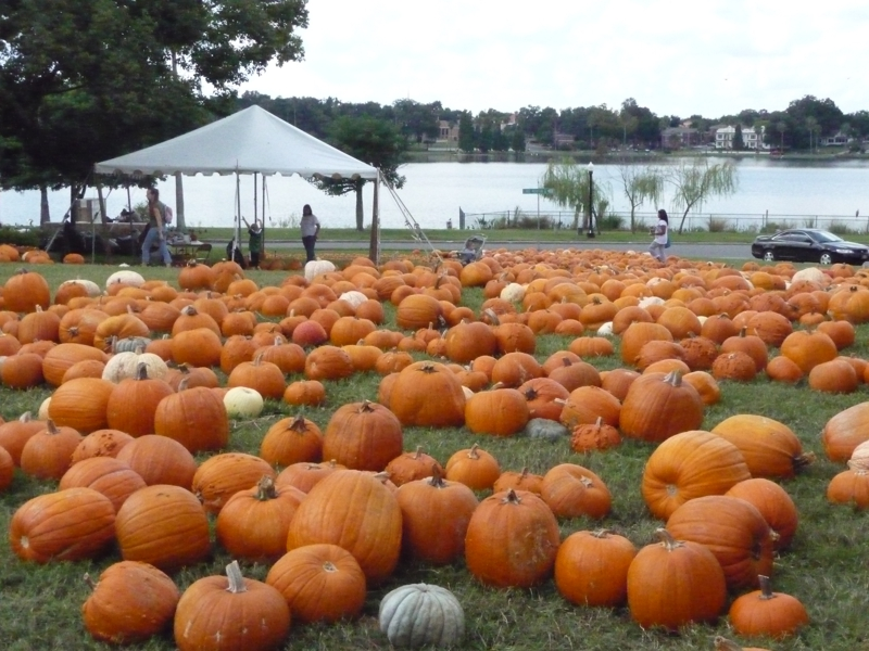 Pumpkin Patch by Lake Morton in Lakeland FL