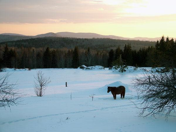 maine winter horse farm photo