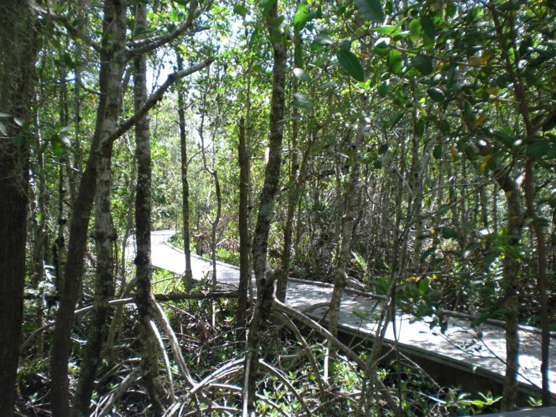 cape coral four mile cove