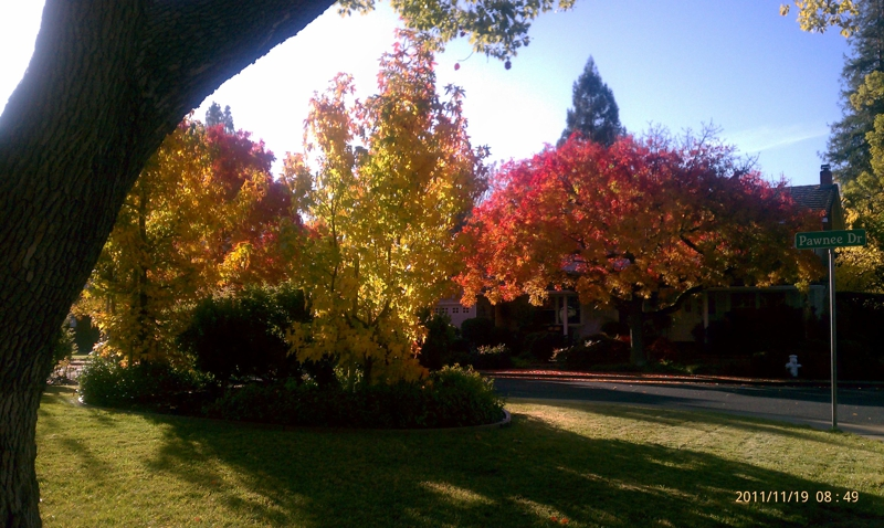 Fall Walnut Creek