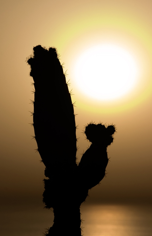 Palm Springs, CA Cactus At Sunset