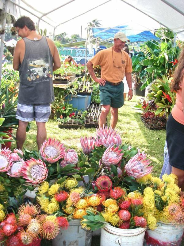 more flowers for sale on Maui