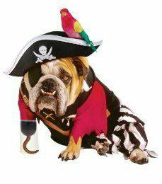 dog in pirate costume
