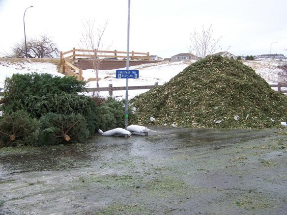 ar119959803366052 How to Recycle Your Christmas Tree