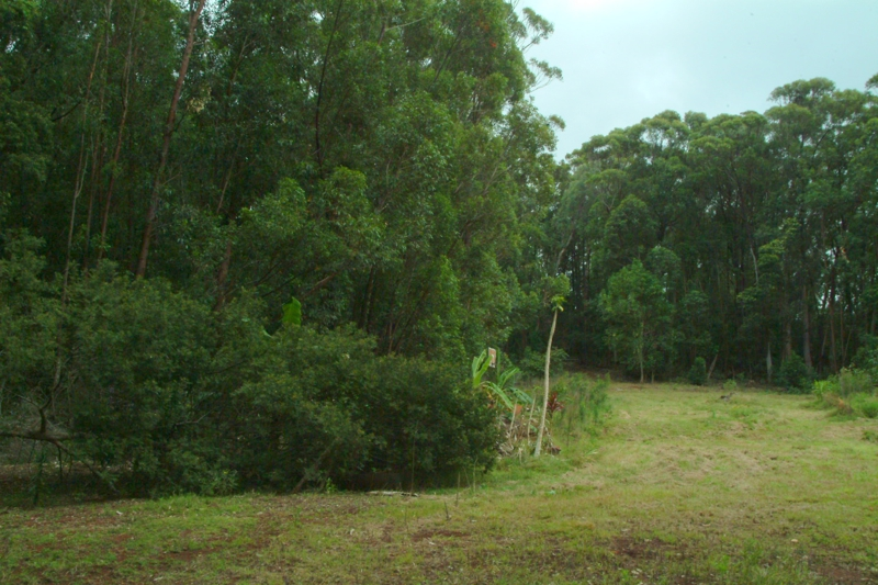 290 Ehu RD Olinda HI 96768 For Sale Vacant Land