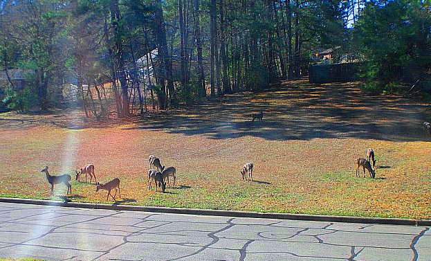 oops --wrong pets-they haang out across the atreet at our Elkins Lake Home-huntsville tx back yard beauty, fall day finally cooled off, Our home in Huntsville TX, Real Estate
