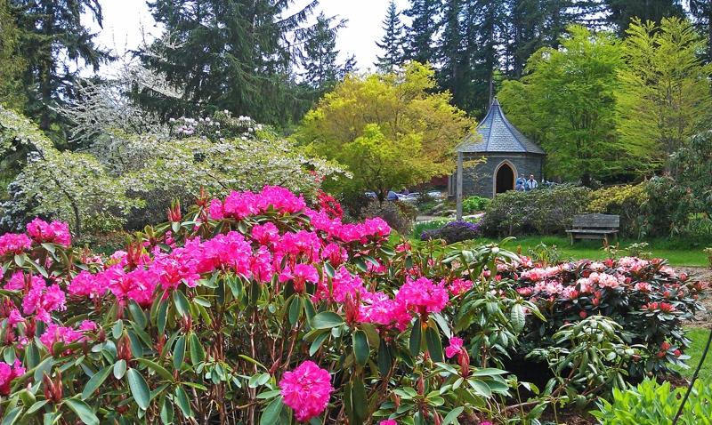 Meerkerk Gardens - Peak Bloom soon!