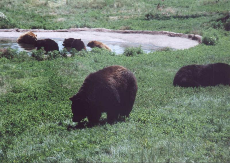 Beware of bears in Jackson Hole