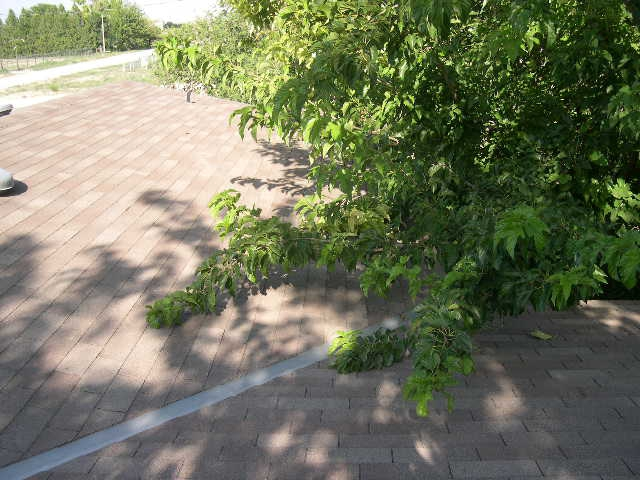 Tree limbs causing damage to roofing materials.
