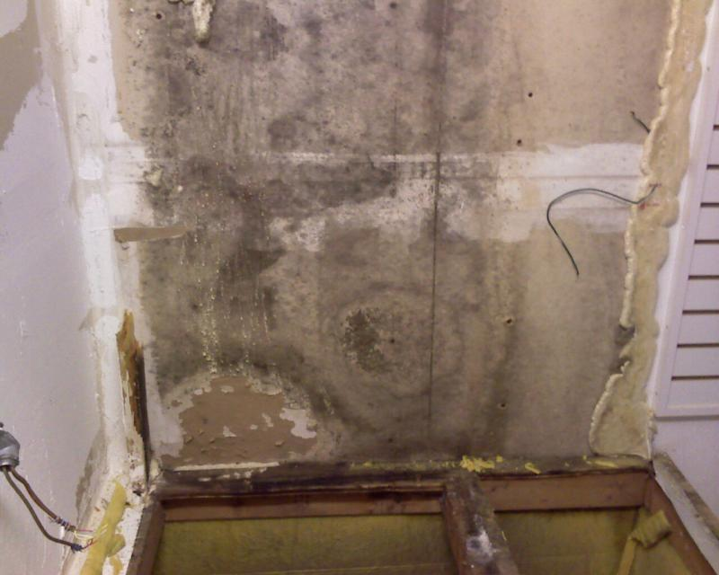Miami Dade Mold Pictures Beach Inspection Pinecrest Testing South Florida Experts Inspectors Boca Raton Help