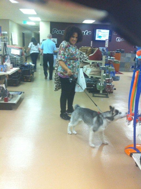 Passionate Pet In Irvine Ca Orange County Lauren