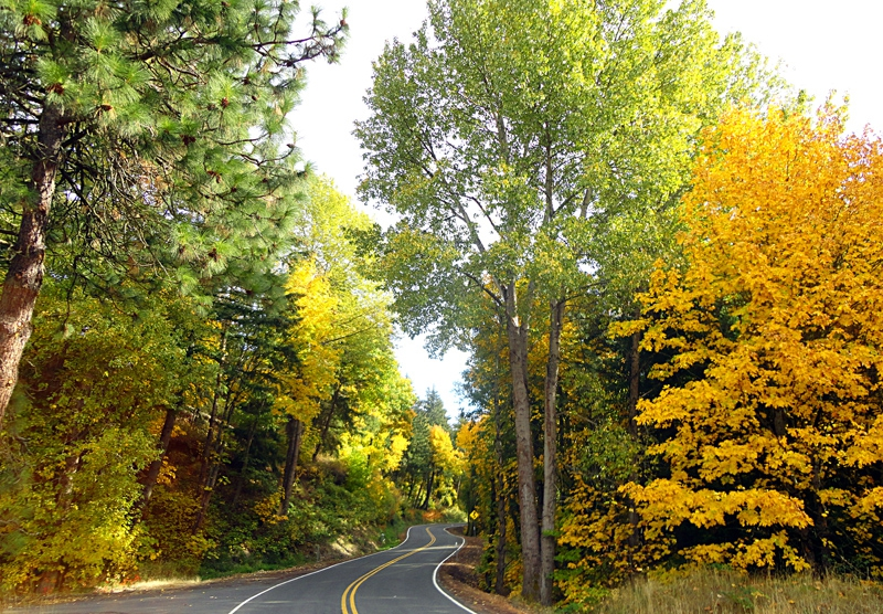 Autumn on Whiskey Creek Rd Hood River