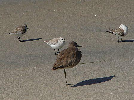 Seabirds on Moonlight Beach in Encinitas CA
