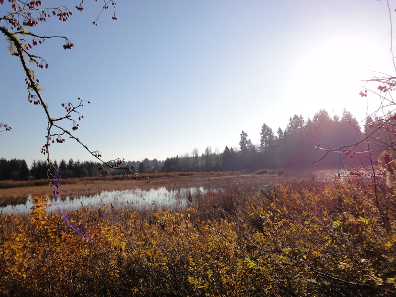 Indian Summer lake view