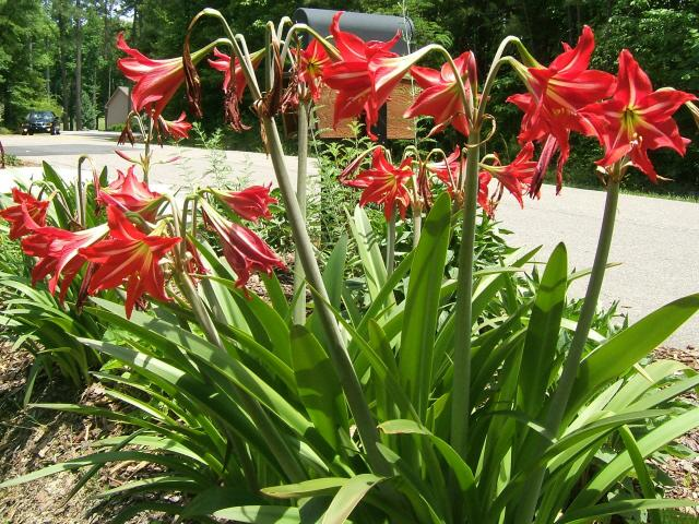 My sanford nc home late spring flowers for Different garden plants