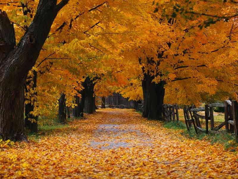 Its that time of the year...Autumn......