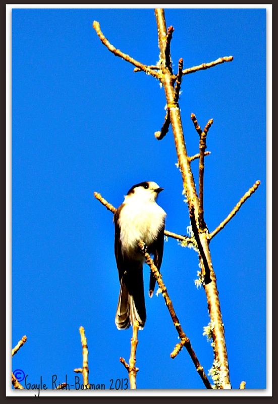 Bird on Pebble Creek Rd-Gayle Rich-Boxman copyrighted All Rights Reserved 2013