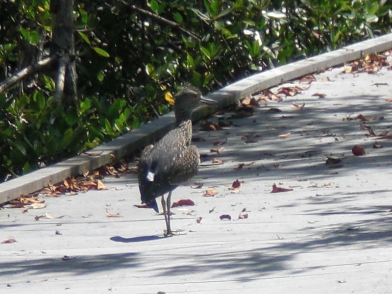 bird in cape coral