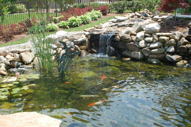 Koi pond predators for Small koi ponds for sale