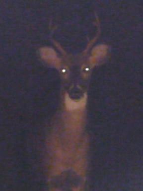 Deer in my Headlights HomeRome Realty